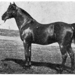 *Garaveen # 244, foaled 1892 sired by *Kismet and out of Kushdil [Kars x *Naomi] bred by F.   Furse Vidal, England, imported by Huntington in 1893.
