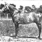 *H.H.Mohamed Ali's Hamida 1929 AHC 890 (*Nasr AHC 889 x Mahroussa)