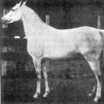 Mahroussa ca. 1920 (Mabrouk Manial x Negma)