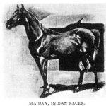 Maidan, ch. s. foaled in 1869 Maneghi Hedruj. Desert bred