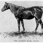 Naomi, Western Horseman