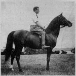 NIMR 232 foaled 1891 15-1 hands by KISMET and out of NAZLI. Bred by Rev. F. Furse Vidal; imported by Randolph Huntington in 1893.